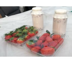 [현장체험] 딸기우유 만들기